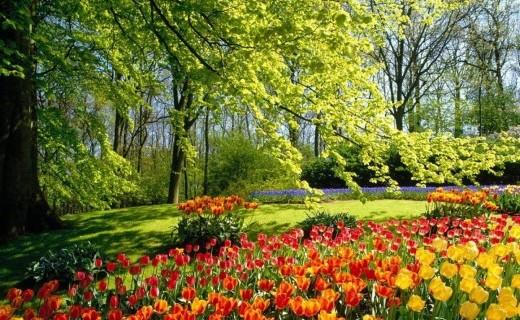 TOP 10 loại cây - hoa được ưa chuộng dịp Tết