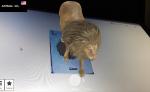 Cách dùng Animal 4D tạo con vật trên màn hình điện thoại và máy tính